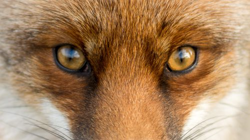 Voir Canthopexie : qu'est ce que le Fox Eye ? Et combien ça coûte ?